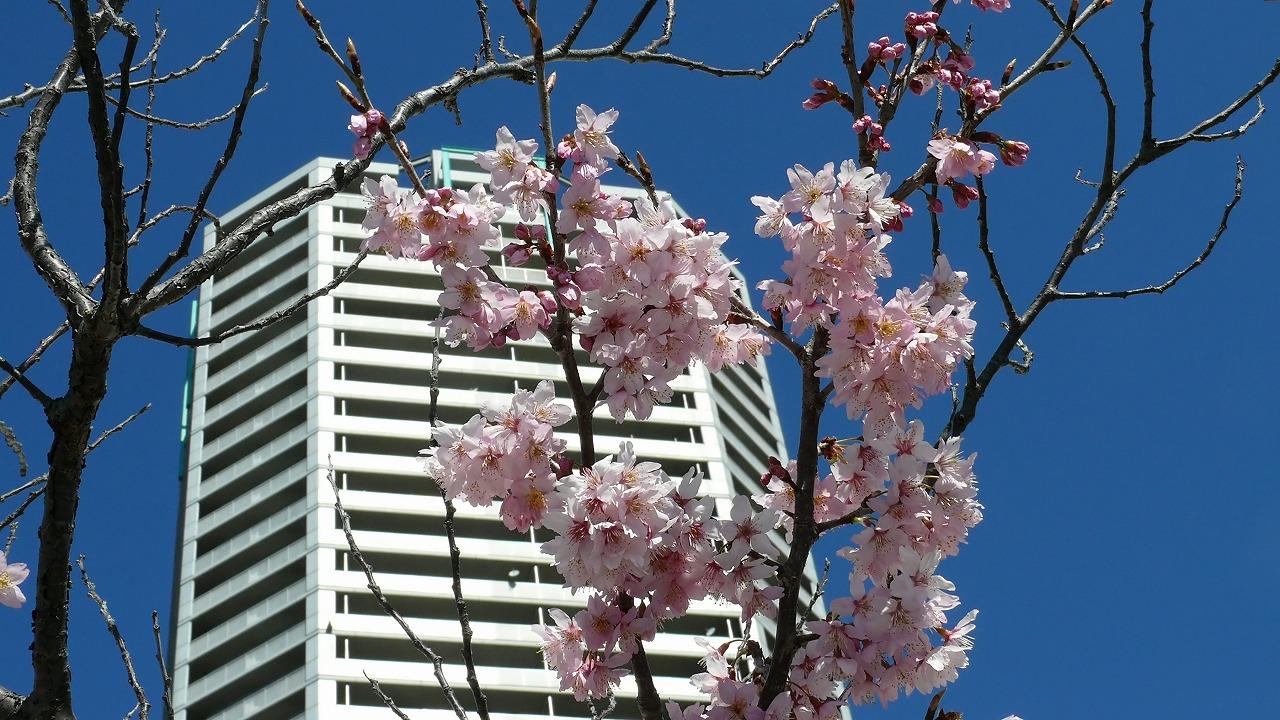 【 日記 3/13 】 ♪小春おばさん_a0185081_16242159.jpg