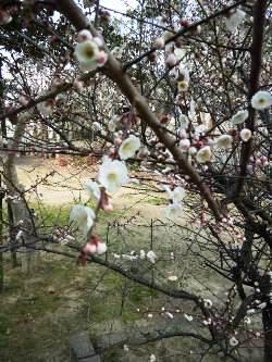 春がきました。_e0188087_23172939.jpg