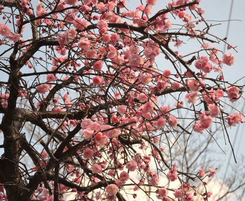 3月14日_e0094102_1648516.jpg