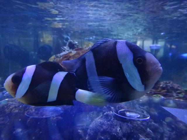 120314  海水魚・水草・淡水魚_f0189122_1257952.jpg