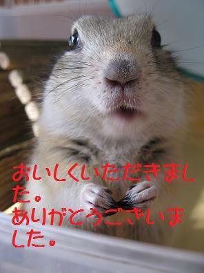 b0138734_2146487.jpg