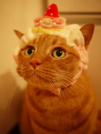 ポンパドゥル苺ショートケーキ猫 しぇる編。_a0143140_2256699.jpg