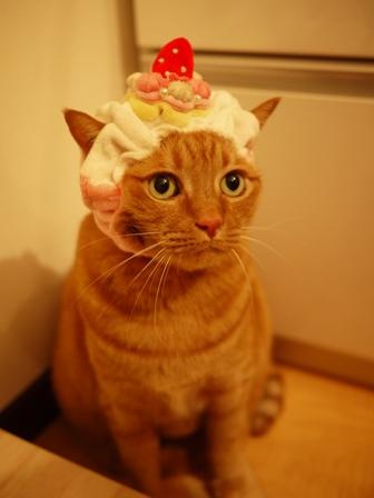 ポンパドゥル苺ショートケーキ猫 しぇる編。_a0143140_22575760.jpg