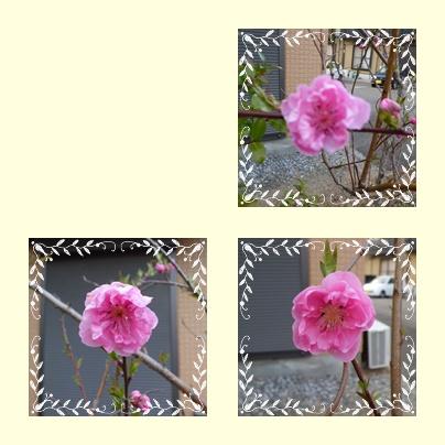 f0031546_2215945.jpg