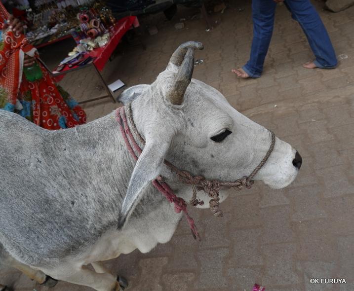 インド旅行記 18  オルチャ その2_a0092659_2053339.jpg