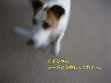 c0179472_17311066.jpg