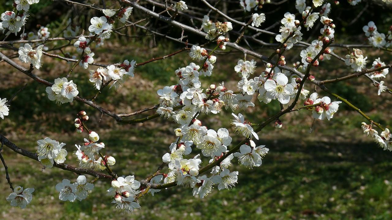 【 日記 3/14 】 ひとり梅祭り_a0185081_1934816.jpg