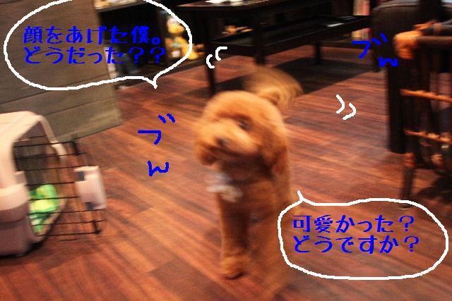 b0130018_956183.jpg