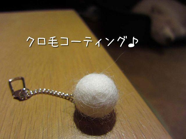 毛玉の神降臨_c0062832_521945.jpg