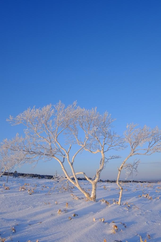 凍樹_f0050534_8305989.jpg