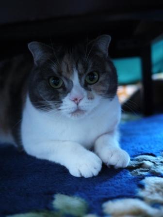 猫のお友だち マミちゃん編。_a0143140_23485776.jpg