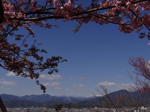 桜咲いた♪_e0240147_14152289.jpg