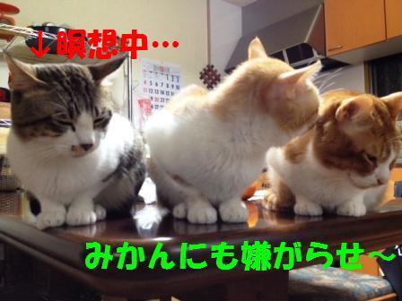 c0194551_2002383.jpg