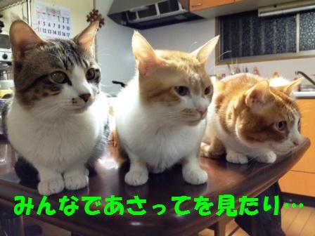 c0194551_2013041.jpg