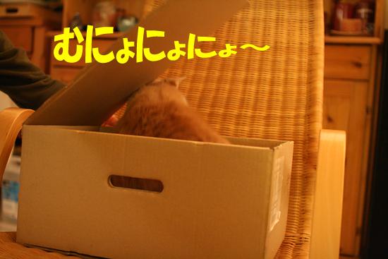 f0068385_729580.jpg