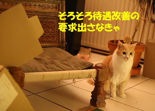 f0068385_7311886.jpg
