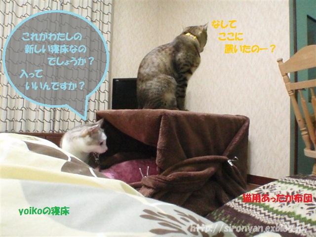 夜の寝床_a0159490_14571178.jpg