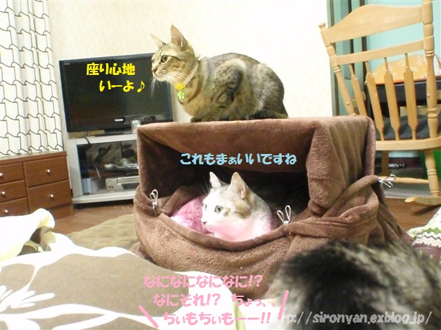 夜の寝床_a0159490_1501133.jpg