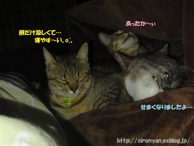 夜の寝床_a0159490_155545.jpg