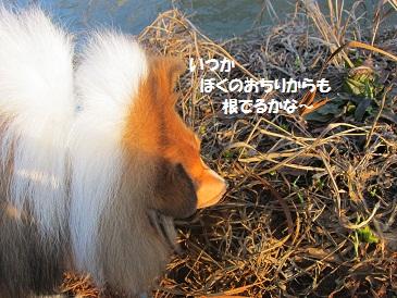 d0180602_16513295.jpg
