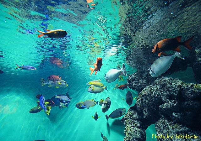 Aquarium ~なんちゃってインテリアアート風~_b0189104_1834151.jpg