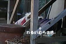f0143007_1956396.jpg