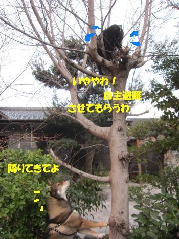 f0143123_20365127.jpg