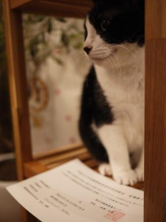 平成23年度熊本市動物取扱責任者研修会。_a0143140_23165538.jpg