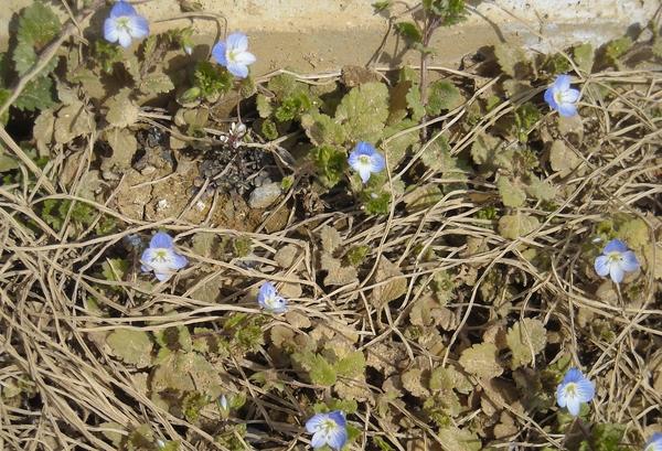 Spring has come!_a0115956_1346438.jpg