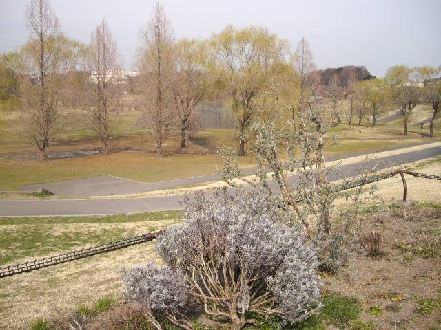 耳をすませば、春の足音。ようやく梅が・・・_d0116059_1728389.jpg