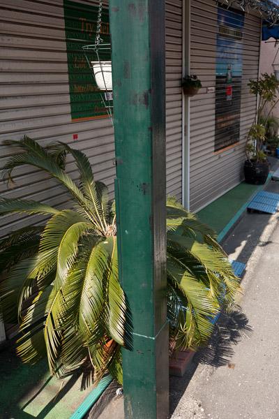 2012/03/16 椎名町界隈_b0171364_9481318.jpg
