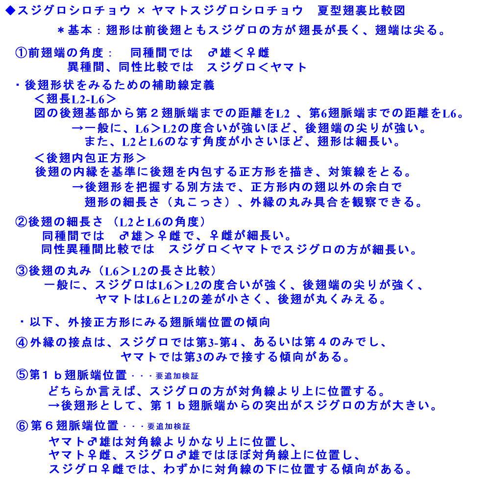 スジグロシロチョウ × ヤマトスジグロシロチョウ夏型の翅裏比較図Ver.2_a0146869_5132382.jpg