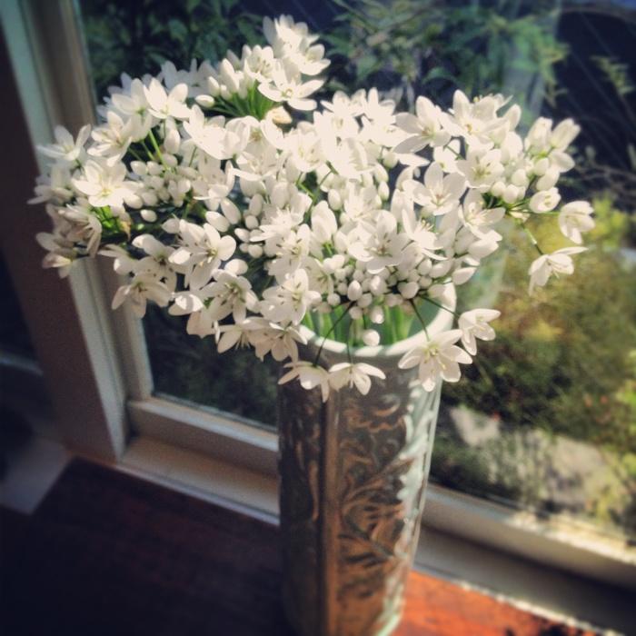 なんの花でしょうー_c0204289_13343361.jpg