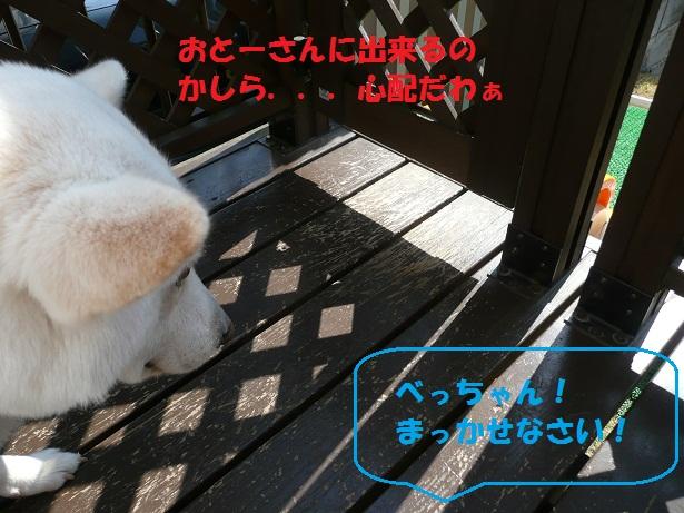 f0121712_1012959.jpg