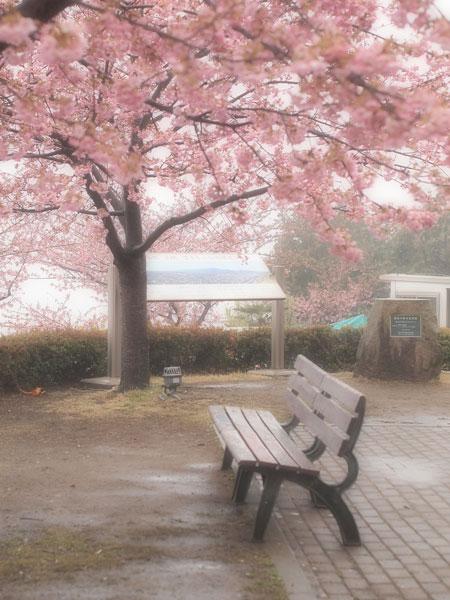 桜雨_d0006718_23384560.jpg