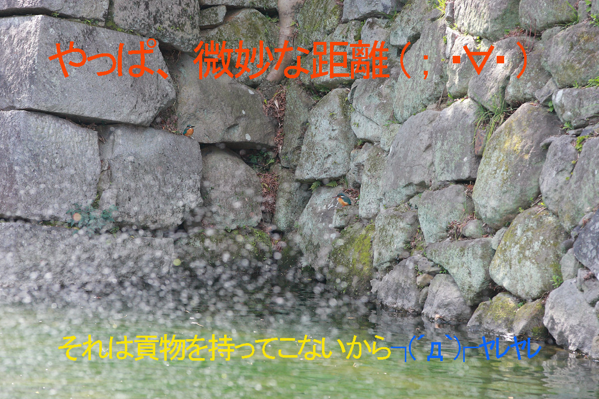 b0222029_853521.jpg