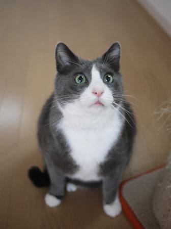 猫のお友だち カン太くん編。_a0143140_2330725.jpg
