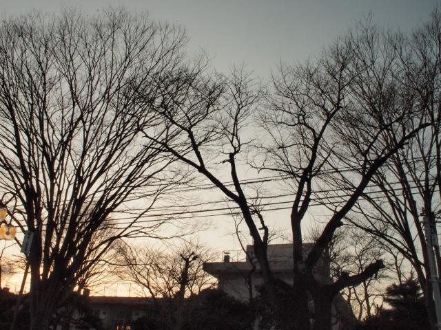 逆光の夕焼け
