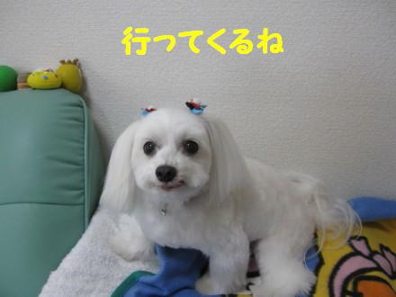 b0193480_140812.jpg