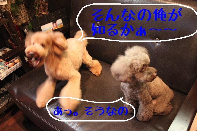 b0130018_9251214.jpg
