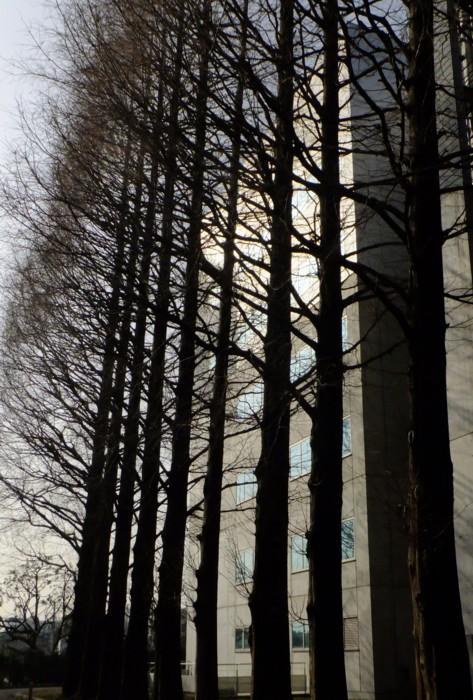 樹木の優等生_f0055131_11431676.jpg