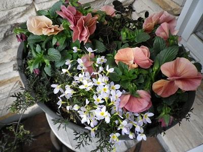 春の寄せ植え_e0086738_16123928.jpg