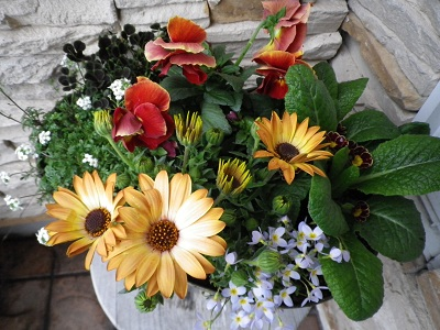 春の寄せ植え_e0086738_16134297.jpg