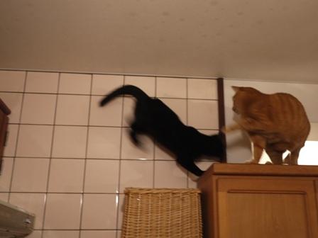 わんぱくでもいい猫 しぇるろった編。_a0143140_23431560.jpg