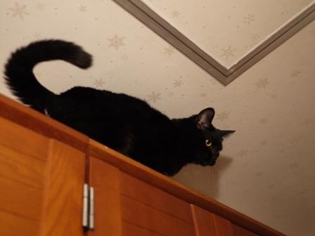 わんぱくでもいい猫 しぇるろった編。_a0143140_23444687.jpg
