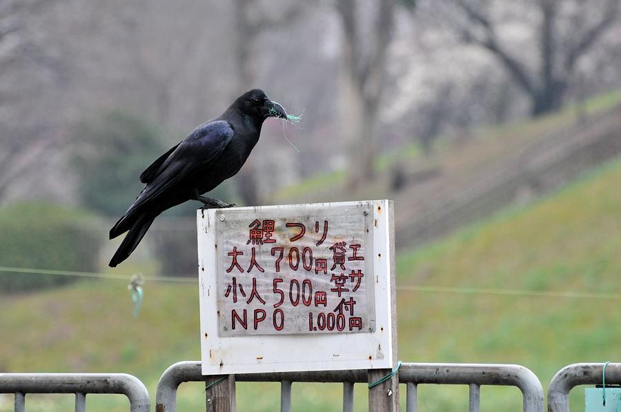 大阪カワセミ撮影_d0148541_22493580.jpg