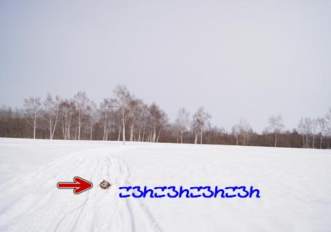f0195891_1955839.jpg