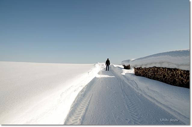 雪の美瑛へ・・・_f0179404_22584134.jpg