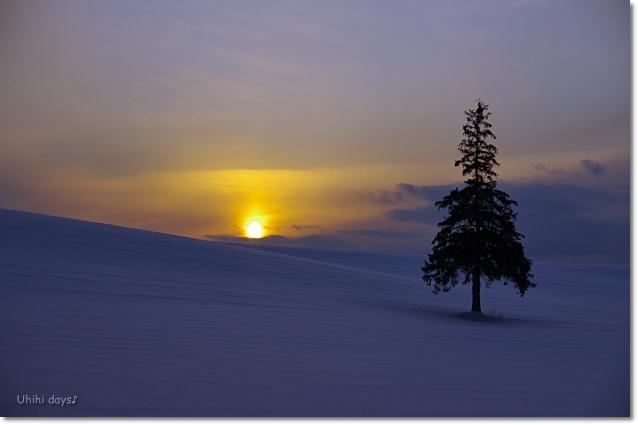 雪の美瑛へ・・・_f0179404_23231527.jpg