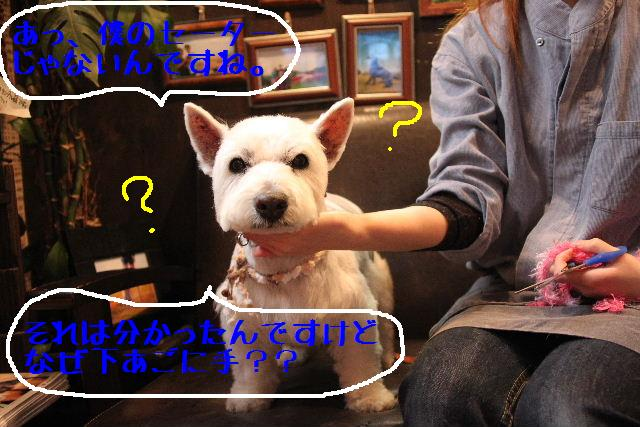 b0130018_15542527.jpg